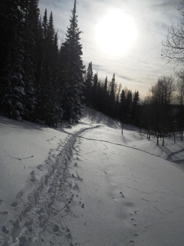 Ski trail crosses elk trail on the West Elk trail